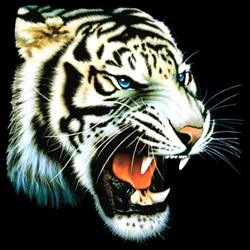 «White Tiger»